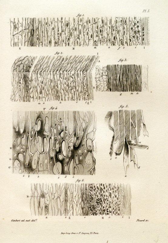 Structure et texture des artères