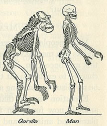 Illustration from a 1923 biology textbook deemed unfit for<br />