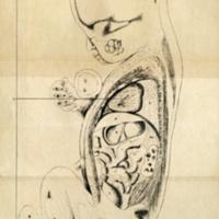 Recherches sur l'anatomie topographique du foetus: applications a l'obstétrique