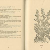 Backcounty Herbal