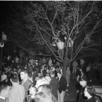People in trees during the victory celebration on Franklin Street near campus of the University of North Carolina after the basketball team defeated the University of Kansas for national championship, 23 March 1957.