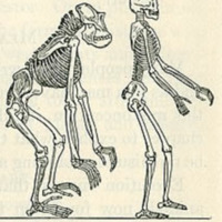 Illustration from a 1923 biology textbook deemed unfit for&lt;br /&gt;<br /> use in North Carolina schools by Governor Cameron Morrison.