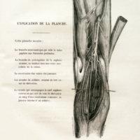 Rescherches anomatomiques et considérations physiologiques sur la circulation veineuse du pied et de la jambe