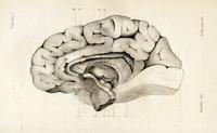 Étude anatomique, physiologique et clinique sur l'hémianesthésie, l'hémichorée et les tremblements symptomatiques