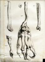 Essai sur la régénération des os.