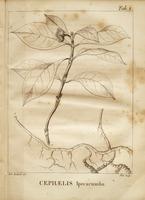 Histoire naturelle et médicale des différentes espèces d'Ipécuanha du commerce