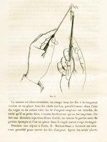 Opérations de fistules vésico-vaginales par le procédé américain de M. Marion-Sims