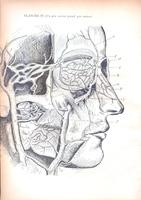 Recherches Anatomiques sur les veines de l'orbite, leurs anastomoses avec les veines des régions voisines