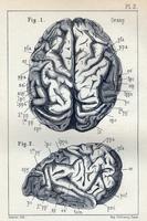 Étude sur les circonvolutions cérebrales chez l'homme et chez les singes